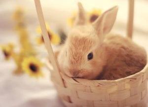 fire-restaurant-easter-weekend-bunny